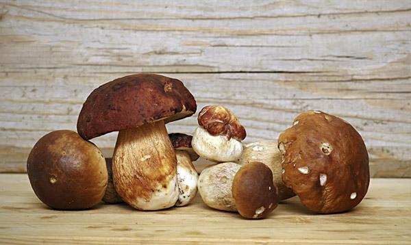 funghi porcini Lariano